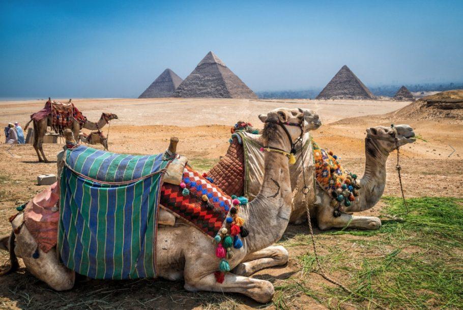 Катание на верблюдах вблизи пирамид Гизы