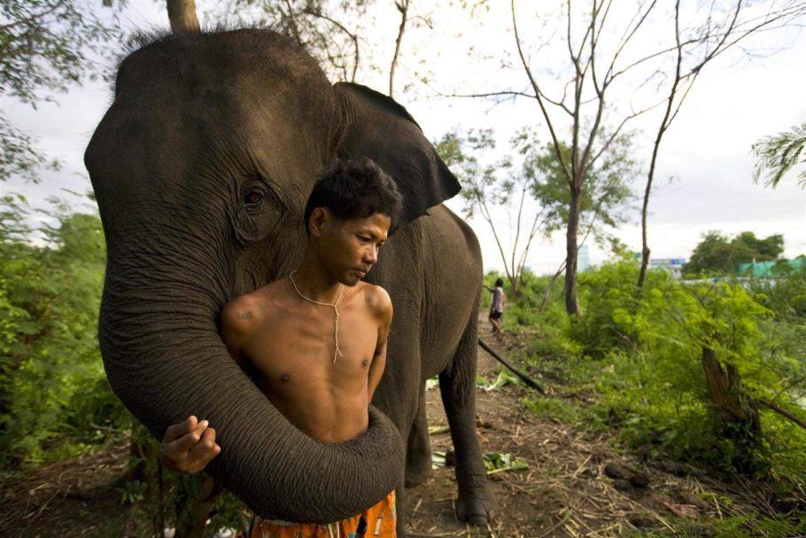 Слоны в Индонезии
