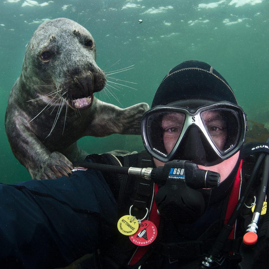 Селфи с морским львом