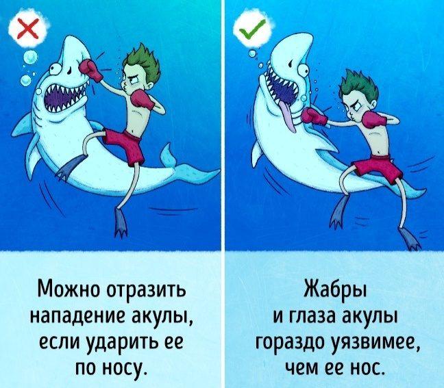 Как защититься от акулы