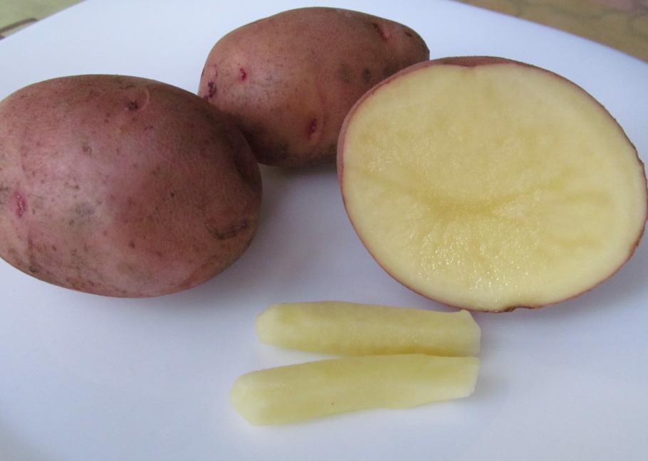 Картофель в разрезе и свечи из картофеля от геморроя