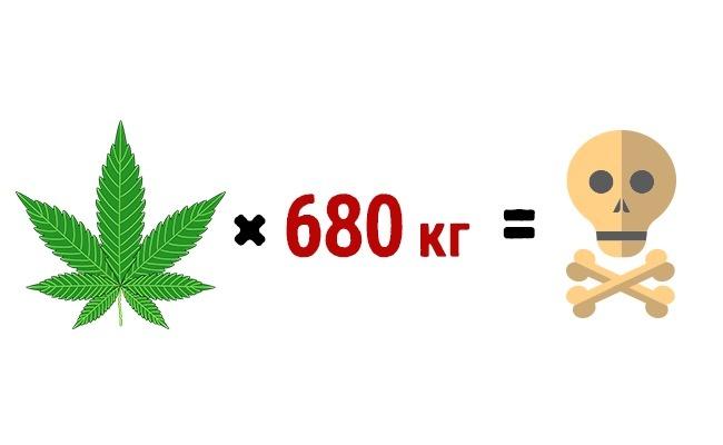 скурив 680 кг марихуаны за 15 минут можно умереть