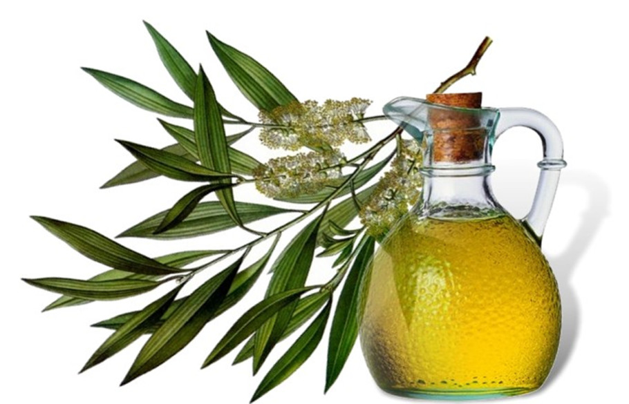 Кувшинчик с маслом чайного дерева и листья этого растения