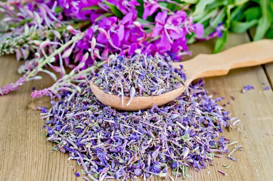 Цвет иван-чая