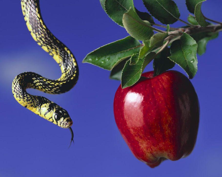 яблоко и змея
