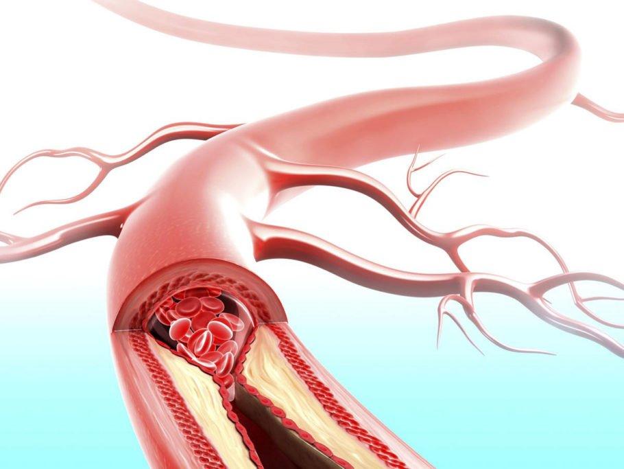 Кровеносный сосуд в разрезе