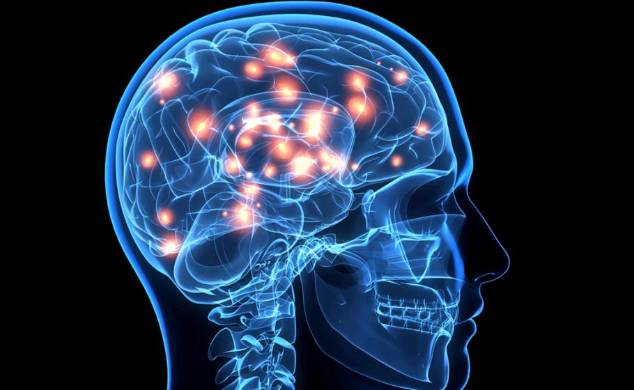 Рисунок головного мозга