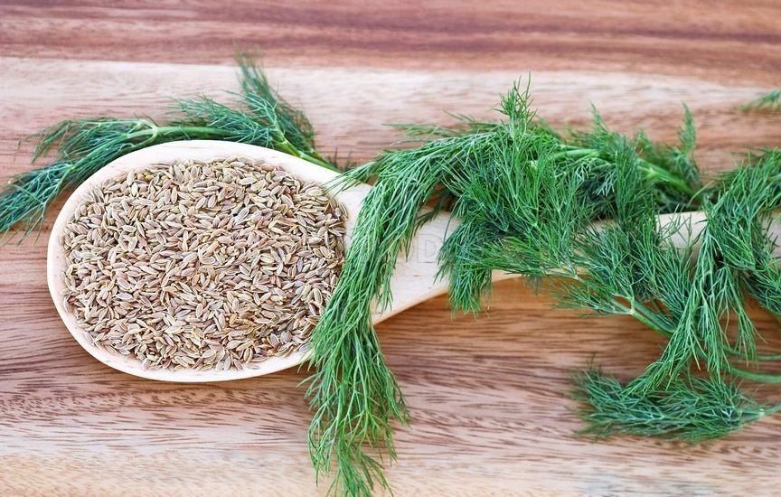 Семена укропа в деревянной ложке