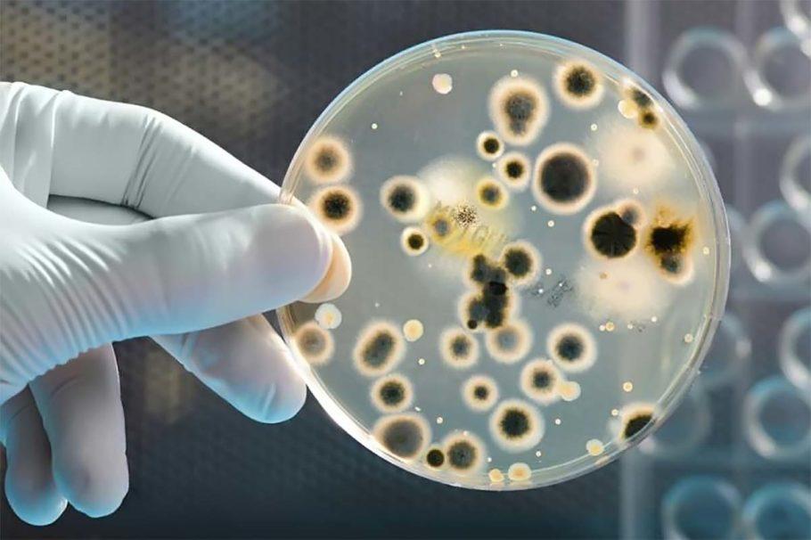 развитие бактерий