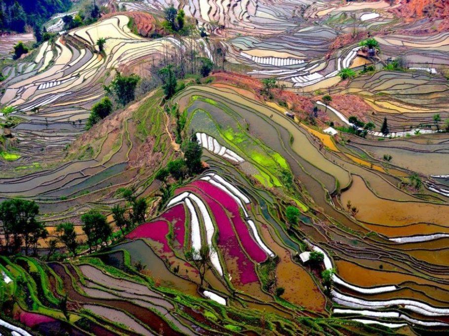 Игра красок рисовых полей в Юаньян, Китай