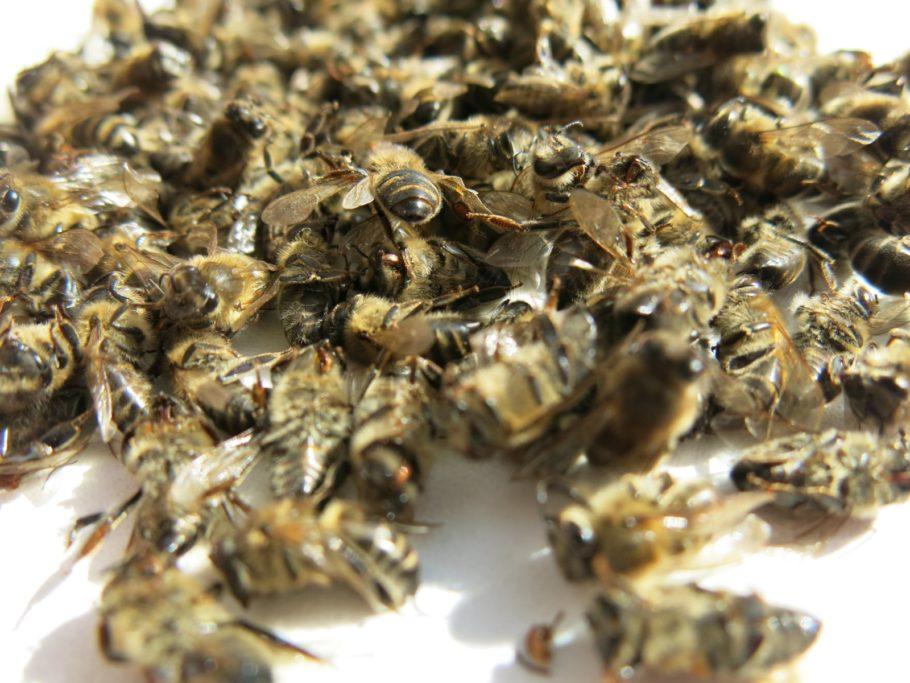 Отвар из пчелиного подмора готовят для внутреннего применения
