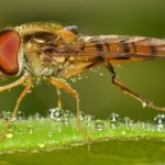 Распознаем укусы насекомых. Первая помощь при укусе насекомых