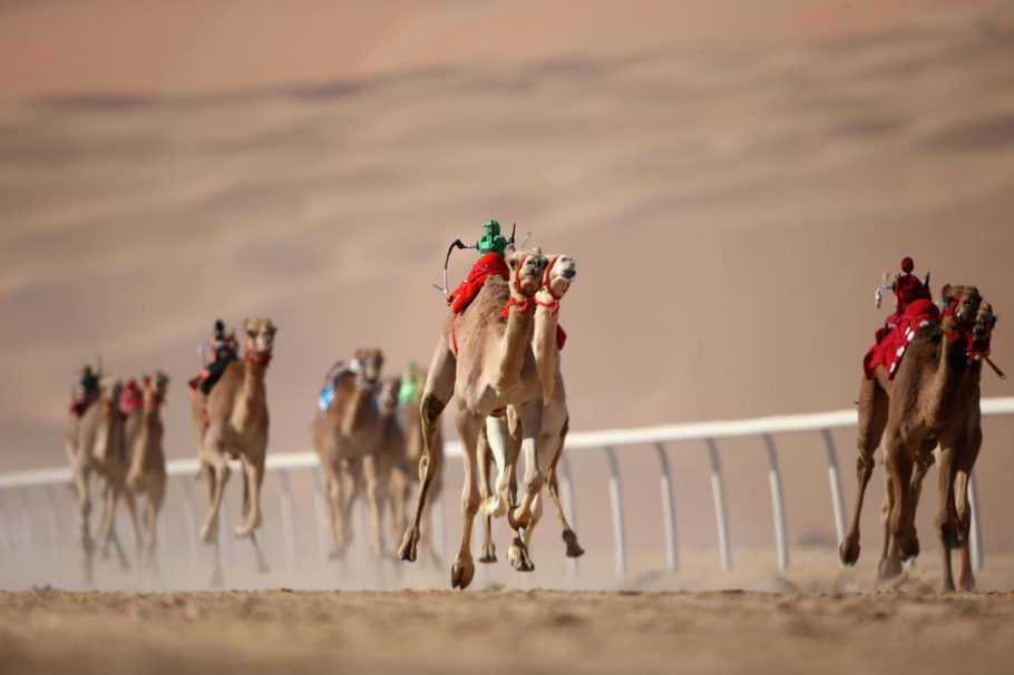 Скачки на верблюдах