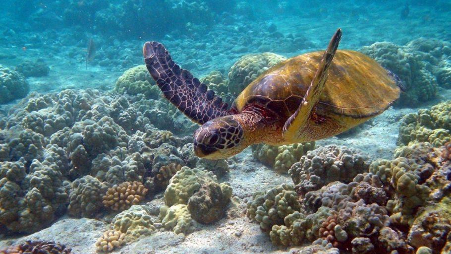 Подводный мир на Мальте