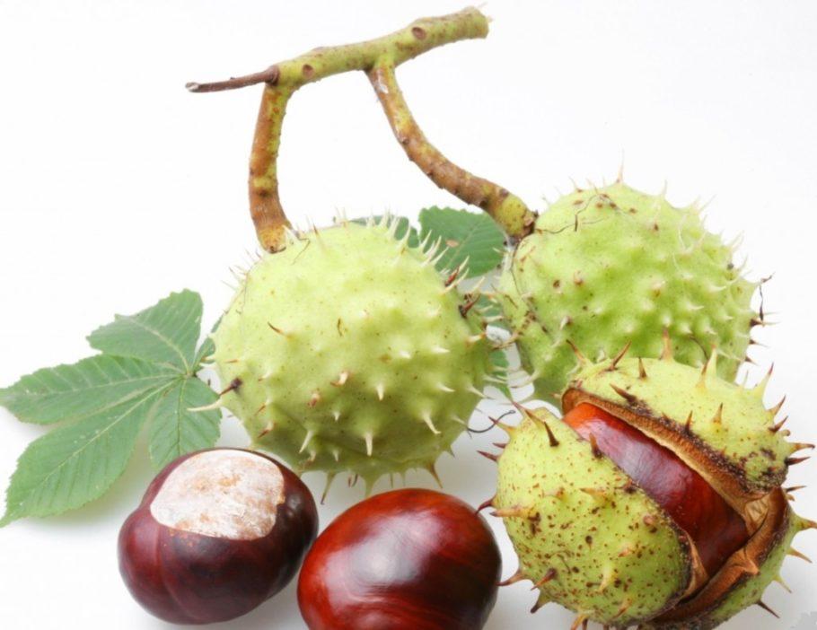 Плоды каштана необходимо сушить не менее 2 месяцев. Срок хранения 2 года