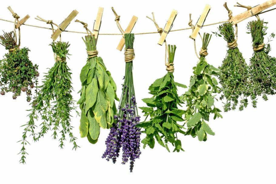 Народная медицина советует лечить геморрой продуктами пчеловодства и пиявками, теплыми ваннами и другими способами