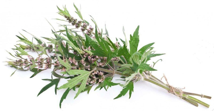 В сердечнике содержится клад положительных компонентов, благодаря которым эта трава выступает незаменимым средством для лечения многих болезней
