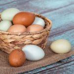 Вся правда о куриных яйцах: вред или польза. Суточная норма для организма
