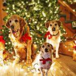 Собаки под новогодней елкой