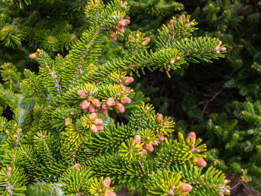 Одним нравится искусственная елочка за ее практичность – хватает на года, а выглядит, как настоящее новогоднее деревце