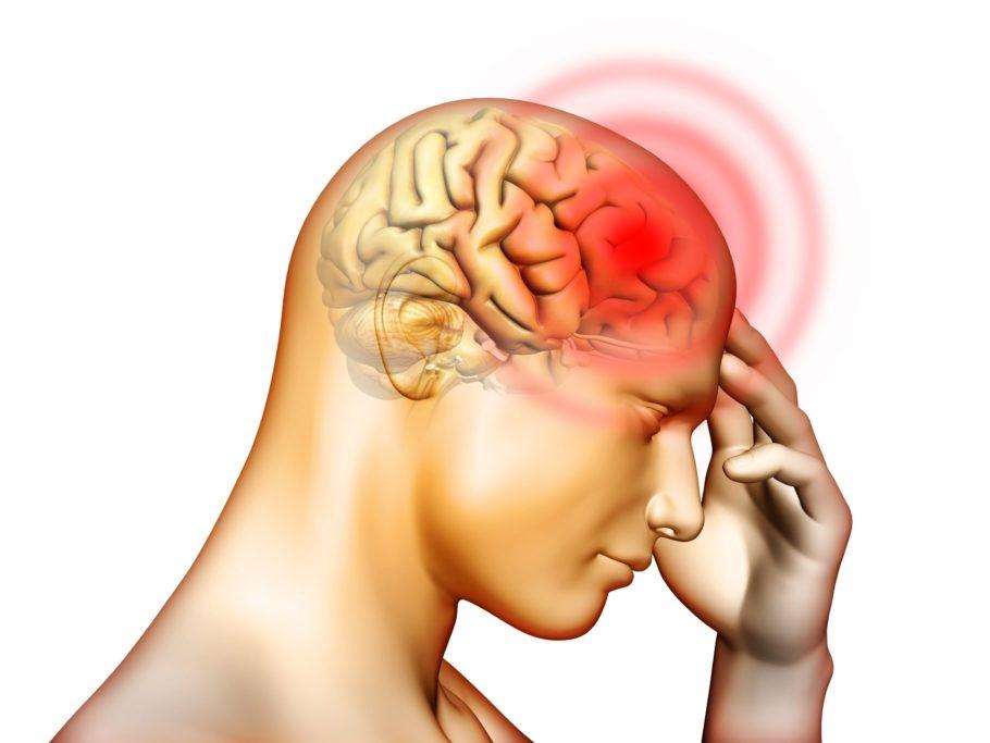 Схема человеческой головы
