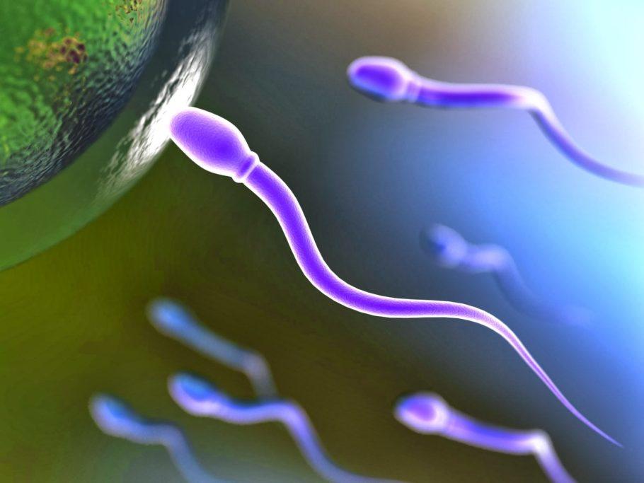 Повышается подвижность сперматозоидов, а вязкость спермы уменьшается