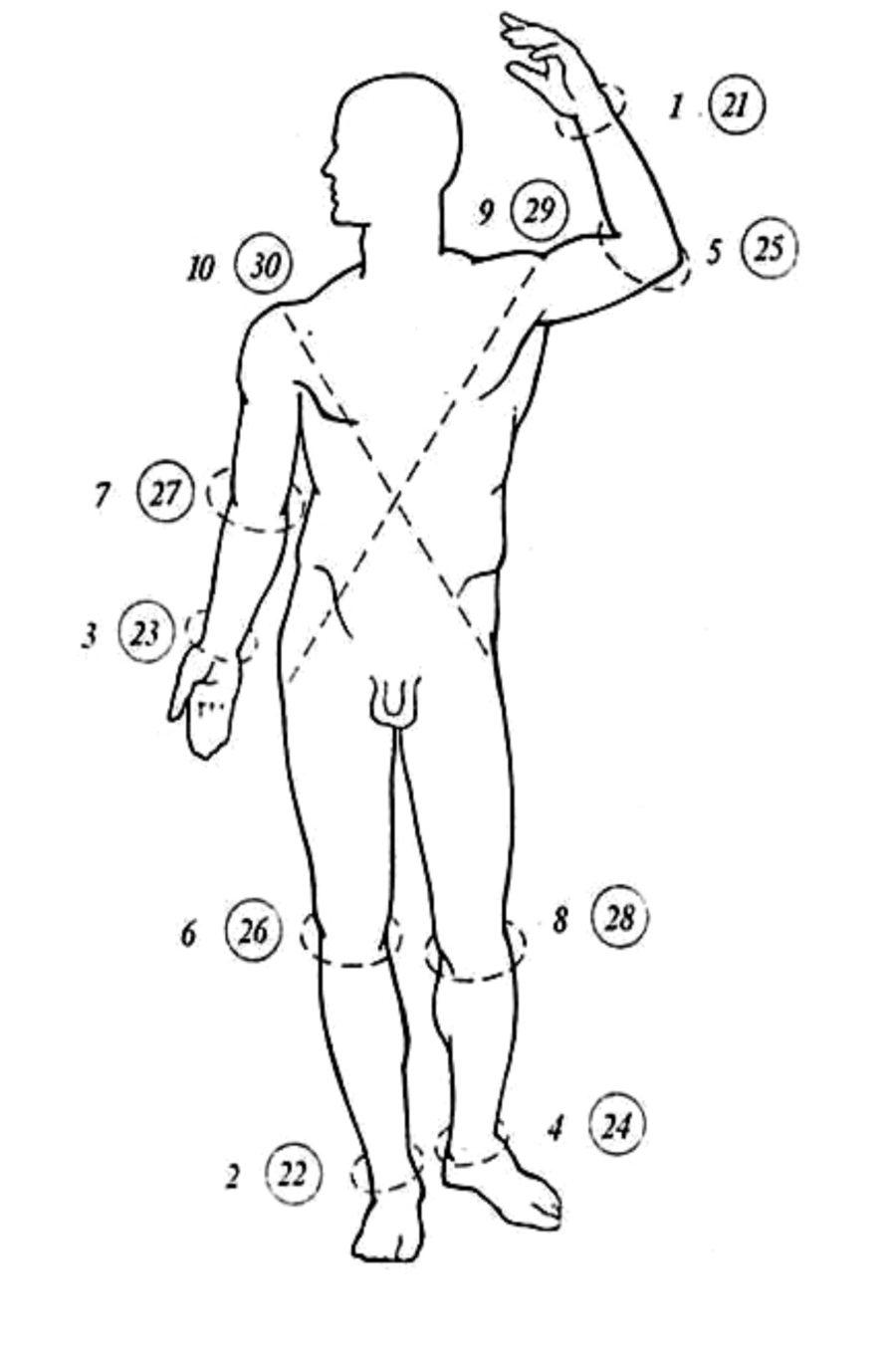 схематический рисунок тело человека