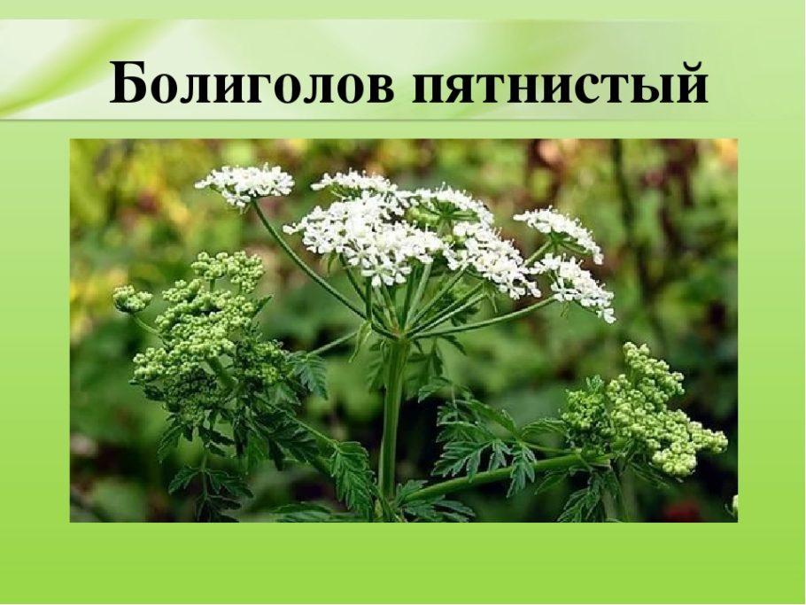 Трава стимулирует отделение мочи