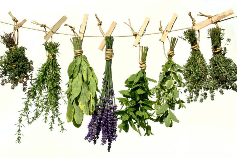 Из природных растений готовят отвары, обладающие гипотензивным действием