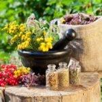 Список самых эффективных трав от простатита. Секреты народных целителей