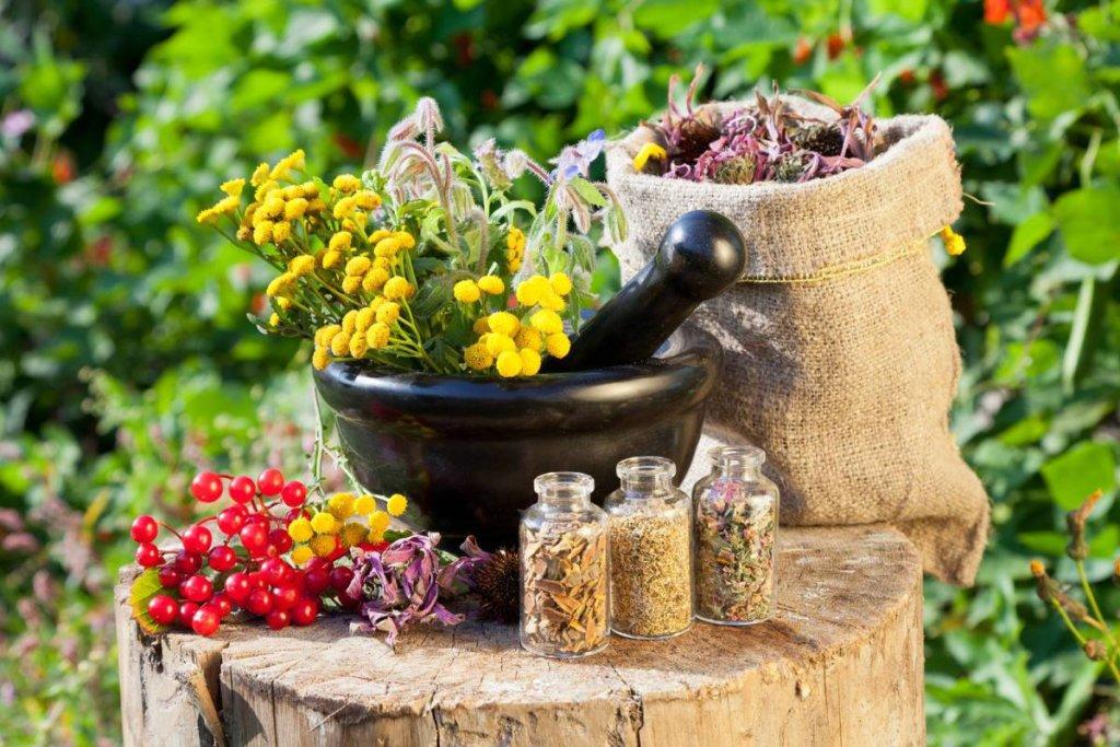 Травы при простатите и аденоме простаты: настои, мочегонные для лечения, рецепты