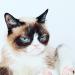 Умер Grumpy Cat